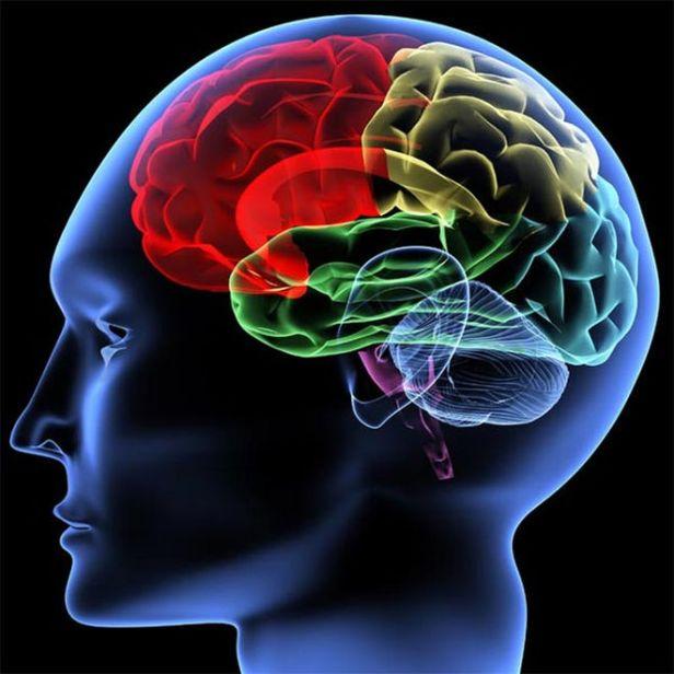 brain-generic-101221-02.jpg