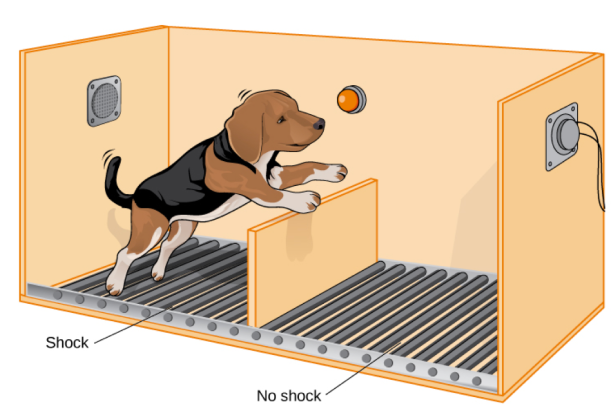 Shuttle_Box_Dog_Orange